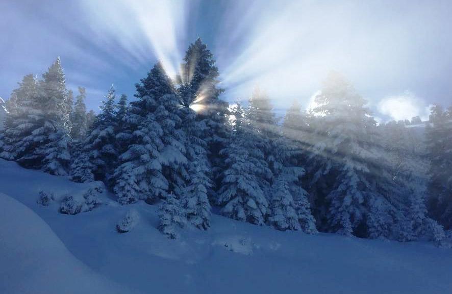 Τα χιονισμένα έλατα στην ημέρα ορειβατικού σκι με τον Ε.Ο.Σ. Αθηνών