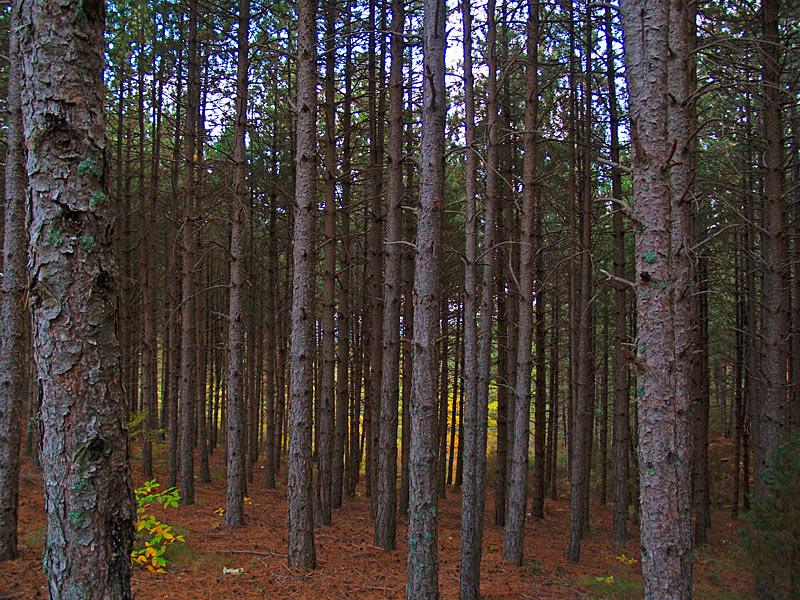 Δάσος Σκυρίτιδας – Μονοπάτι Βλαχοκερασιάς